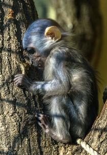 Affen Baby von Stephan Gehrlein