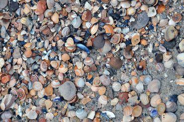 Dsc-0047-wyk-strand-muscheln-munk-kunst-nordhorn-fotografie-heinz