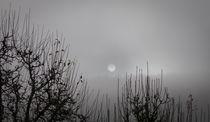 misty winter sun by Erik Mugira