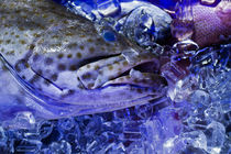 Fangfrisch auf Eis von Hartmut Binder