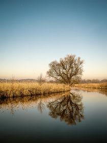 Uferlandschaft mit Baum - Naturschutzgebiet Radolfzeller Aachried by Christine Horn