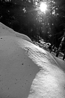 Entre los rayos congelados  by Enache Armand Iustinian