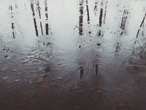 Reflected trees by Andrei Grigorev