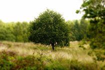 Der Baum von maja-310