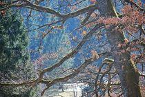 magischer Baum... 3 von loewenherz-artwork