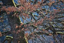 magischer Baum... 2 by loewenherz-artwork
