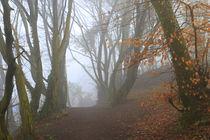 Nebelmorgen by Bernhard Kaiser