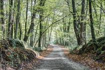 Walking the Path (Fageda d'en Jordà, Catalonia) von Marc Garrido Clotet