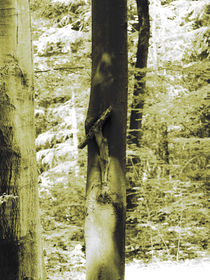 on the cross von Stefan Herkenrath