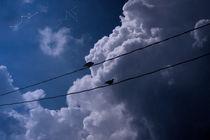 Blue Sky by Brenda Maciel
