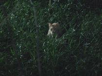 the cat von Brenda Maciel