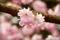 Frühling-1 von maja-310