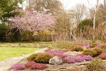 Frühling-3 von maja-310