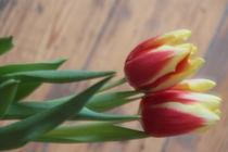 Zwei Tulpen by Gerda Hutt