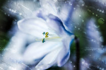 Coole Blume by Nicc Koch
