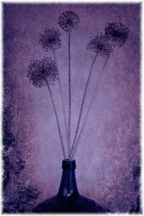 Allium by mario-s