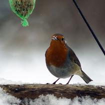 Rotkehlchen mit Schnee am Schnabel von Sabine Radtke