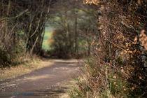 Waldweg von Armin Kröff