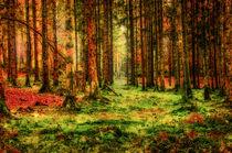 Wald mit Moosen und Farnen von Nicc Koch