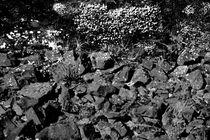 Zwischen den Steinen von Bastian  Kienitz