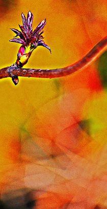spring dance... 12 by loewenherz-artwork