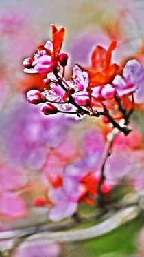 spring dance... 17 by loewenherz-artwork