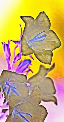 spring dance... 20 von loewenherz-artwork