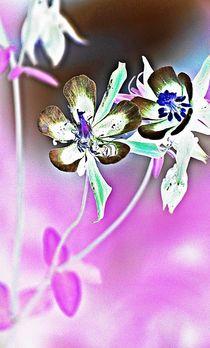 spring dance... 19 by loewenherz-artwork
