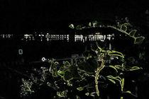 Nacht am See by Renate Dienersberger