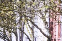 Frühling in der Stadt von Petra Dreiling-Schewe