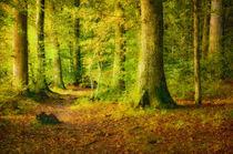 Wald im Sonnenlicht by Nicc Koch