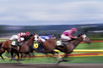 Horse Race von Jim Corwin