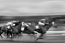 Horse Race by Jim Corwin