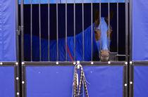 Horse in Stable von Jim Corwin