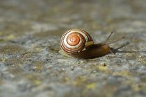 Mini Schnecke by leddermann