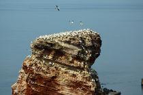 Brütende Vögel auf der langen Anna von Sabine Radtke
