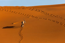 Oryx-Antilope in den Sanddünen der Namib von Stefan Schütter