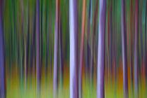Harmonie von Farben und Formen von Stefan Schütter