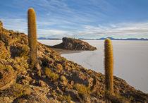 Abenteuer Altiplano von Stefan Schütter
