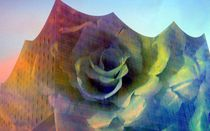 Rose auf Elphi by Peter Norden