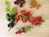 Wilfdrüchte im Herbst Schlehen, Kornelkirschen, Sanddorn, Hagebutten, Berberitze und Weißdorn von Heike Rau