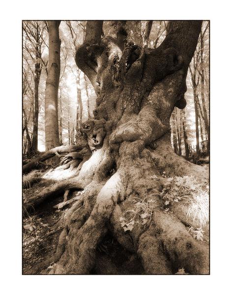 Baum-1-kopie