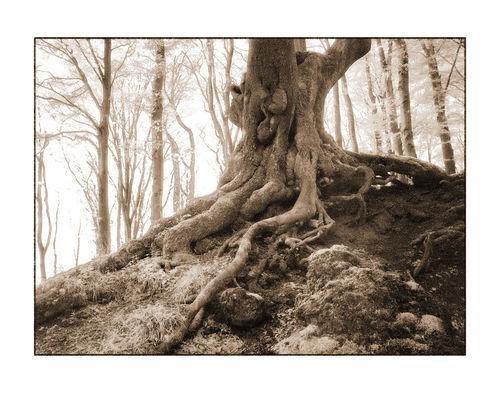 Baum-2-kopie