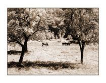 Pferde 1 by Theo Broere