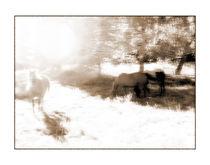 Pferde 2 von Theo Broere