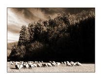 Schafe von Theo Broere