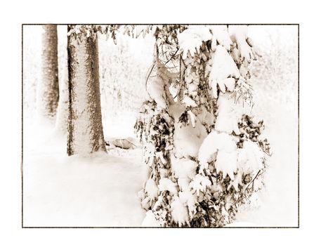 Winter-1-kopie