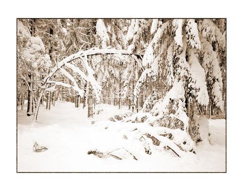 Winter-2-kopie