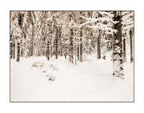 Winter 5 von Theo Broere