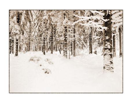 Winter-5-kopie